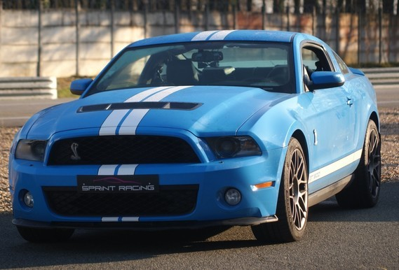 Shelby 001