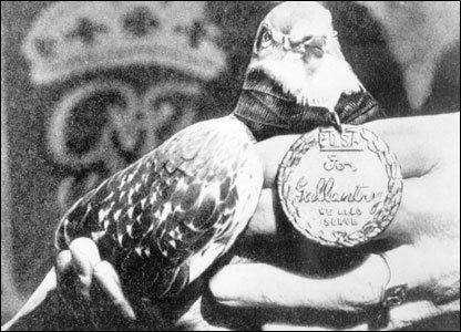 pigeon-medaille-militaire